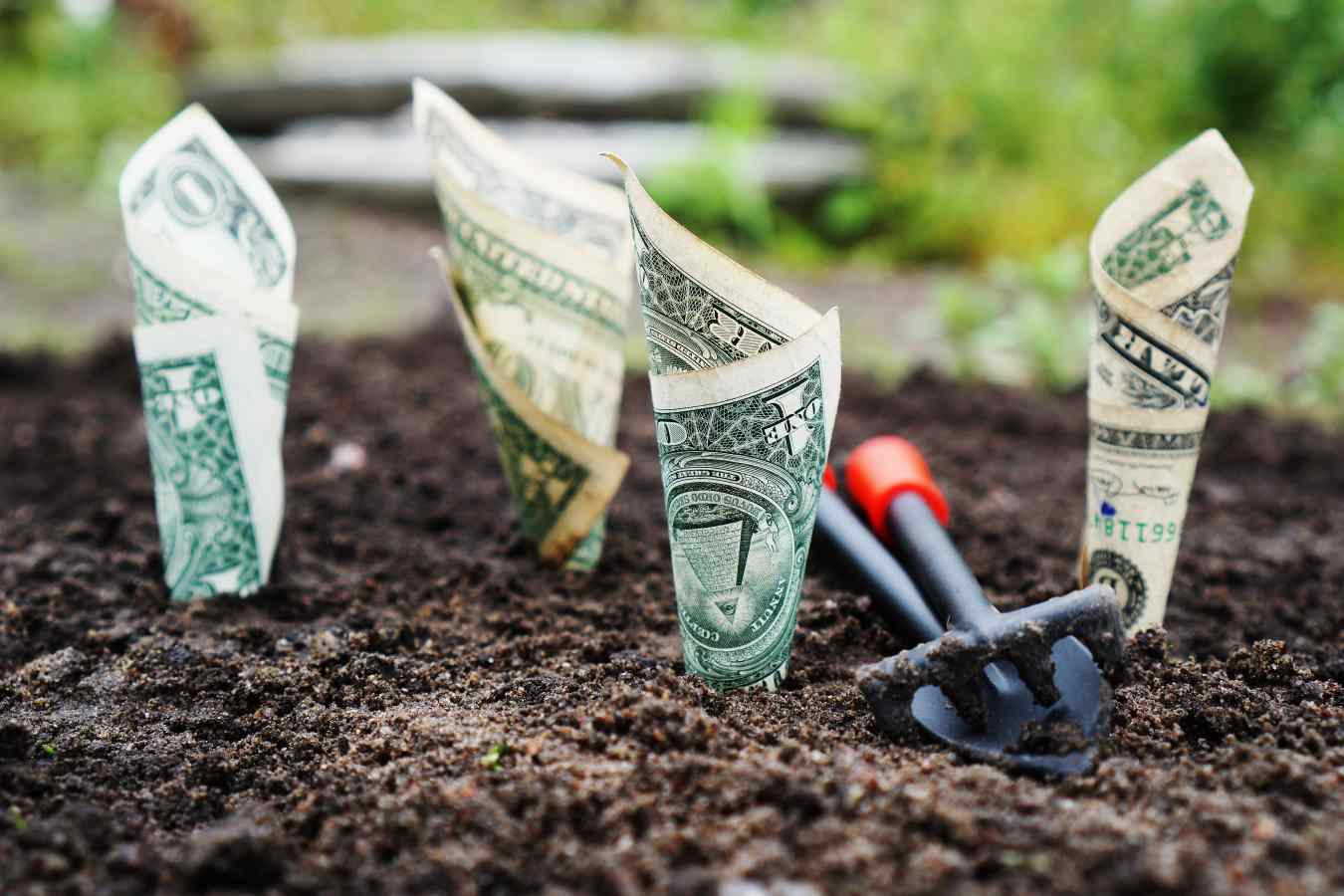 rolled dollar bills stuck in the soil, as if to grow.